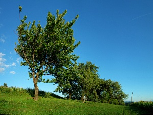 Trees, grass, blue sky in HDR
